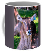 Ellipsis Waterbuck Coffee Mug