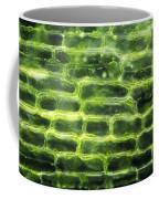 Elodea Leaf Coffee Mug