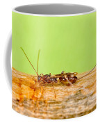 Emerald Ash Borer Parasite Coffee Mug by Science Source