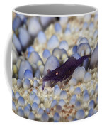 Emporer Shrimp On A Large Pin Cushion Coffee Mug
