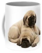 English Mastiff Puppies Coffee Mug