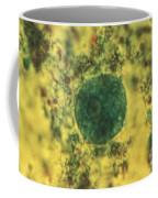 Entamoeba Coli Trophoite Lm Coffee Mug