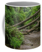 Entrance To Fern Canyon Coffee Mug