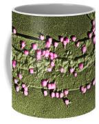Escherichia Coli On A Cell Wall Coffee Mug