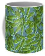 Euglena, Lm Coffee Mug