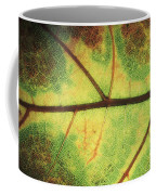 European Beech Fagus Sylvatica Detail Coffee Mug