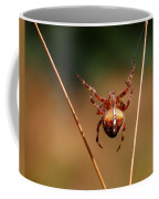Hanging Tough Coffee Mug