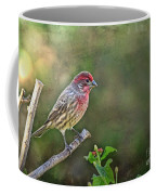 Evening Finch Blank Greeting Card Coffee Mug
