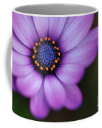 Eye Of The Daisy Coffee Mug