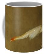 Fairy Shrimp Thamnocephalus Platyrus Coffee Mug