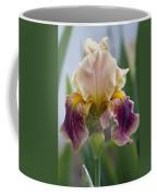 Fancy Dancy Iris Coffee Mug