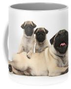 Fawn Pugs, Mother And Pups Coffee Mug