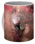Feather Blenny Female Coffee Mug