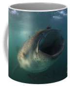 Feeding Whale Shark, La Paz, Mexico Coffee Mug