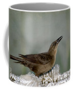 Female Boat Tailed Grackle Coffee Mug