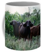 Female Cape Buffalo Syncerus Caffer Coffee Mug