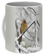 Female Cardinal 3656 Coffee Mug