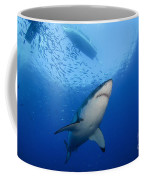 Female Great White, Guadalupe Island Coffee Mug