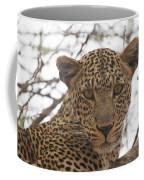 Female Leopard Close-up Coffee Mug