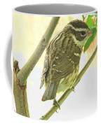 Female Red Breasted Grossbeak Coffee Mug