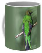 Female Resplendent Quetzal - Dp Coffee Mug