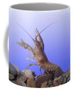 Female Rusty Crayfish Coffee Mug