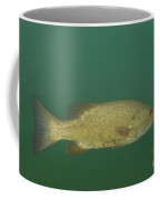 Female Smallmouth Bass Coffee Mug