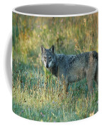 Femle Gray Wolf In The Morning Light Coffee Mug