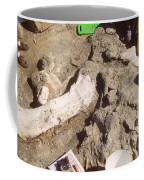 Femur Of Camarasaurus Covered Coffee Mug