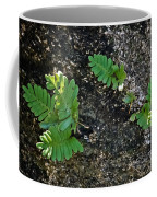 Fern And Coquina Coffee Mug