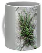 Fern Growing From Crack In Limestone Coffee Mug