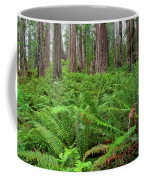 Ferns And Redwoods Coffee Mug