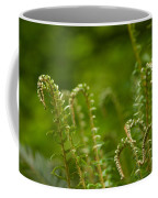 Ferns Fiddleheads Coffee Mug