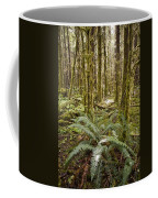 Ferns Sit On The Forest Floor Coffee Mug by Taylor S. Kennedy