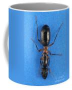 Field Ant Coffee Mug