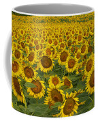 Field Of Domestic Sunflowers Coffee Mug by Kenneth M Highfill and Photo Researchers