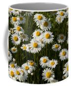 Field Of Oxeye Daisy Wildflowers Coffee Mug