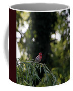 Finch In The Willow Coffee Mug