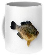 Fish Mount Set 08 A Coffee Mug