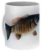 Fish Mount Set 10 A Coffee Mug