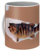 Fish Mount Set 11 B Coffee Mug