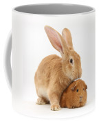 Flemish Giant Rabbit With Red Guinea Pig Coffee Mug