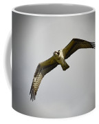 Flight Of The Osprey Coffee Mug
