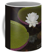 Victoria Amazonica White Flower Coffee Mug