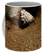 Fools Gold And Pine Cone Coffee Mug