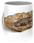Fossilized Fish Coffee Mug