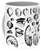 Fossilized Shells, 1844 Coffee Mug