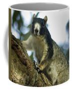 Fox Squirrel Coffee Mug by Phill Doherty