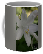 Fragrant Plaintain Lily Coffee Mug