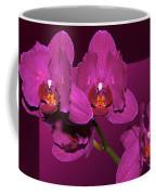 Framed Orchids Coffee Mug